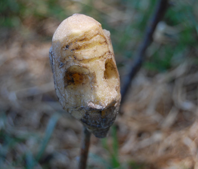 marlenefalgon